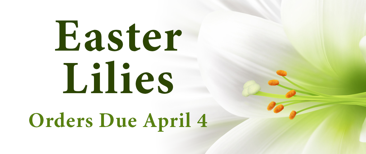 Easter Lilies for Purchase